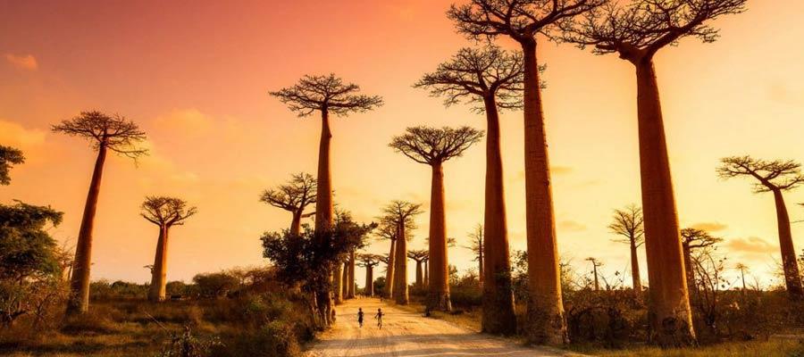 Alameda-dos-baobas-madagascar
