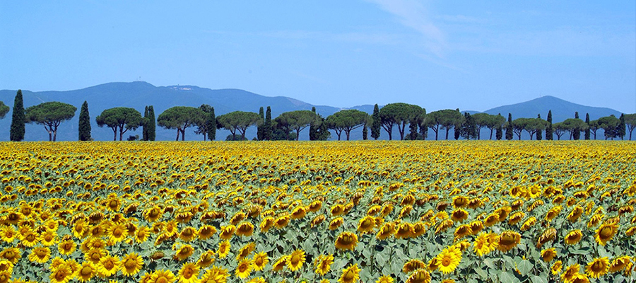 Viajando até o coração da Toscana